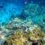 coral_reefs_in_papua_new_guinea