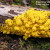 Network theory: the role of slime mould in the distribution of wealth